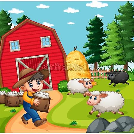 farmer boy with animal farm sheep