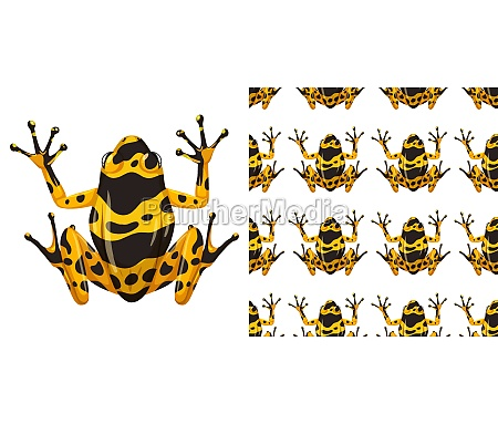 yellow banded poison dart frog isolated