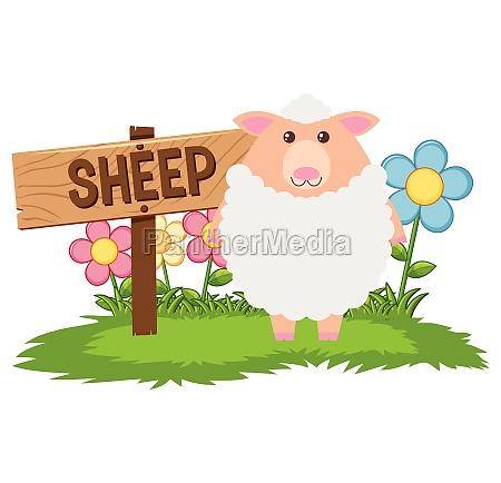 white sheep in the farm