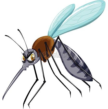 wild mosquito on white background