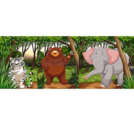 wildlife animals in the jungle