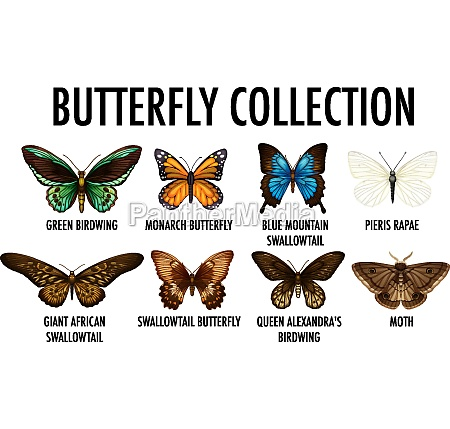 set of different butterfly collection