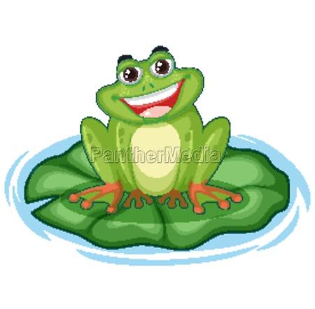 cute green frog on lotus leaf