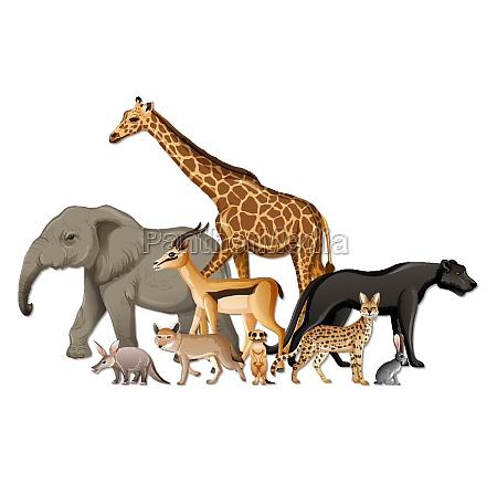 group of wild african animals on