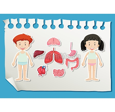 boy and girl with different organs
