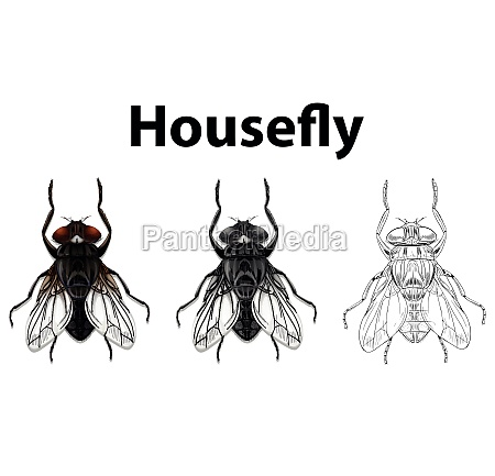 doodle animal for housefly