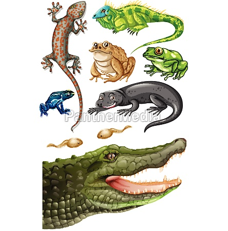 different types of reptiles