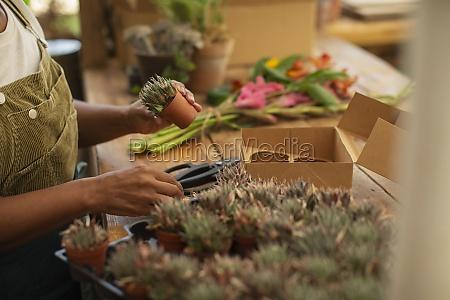 female florist with tiny succulent plants