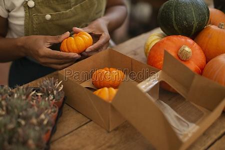 woman boxing bright orange pumpkins in