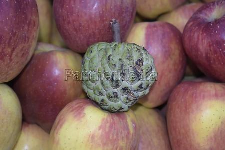 closeup shot of a custard apple