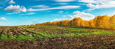agro field in autumn