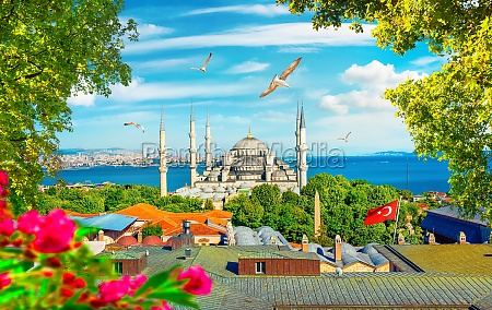 blue mosque and flowers