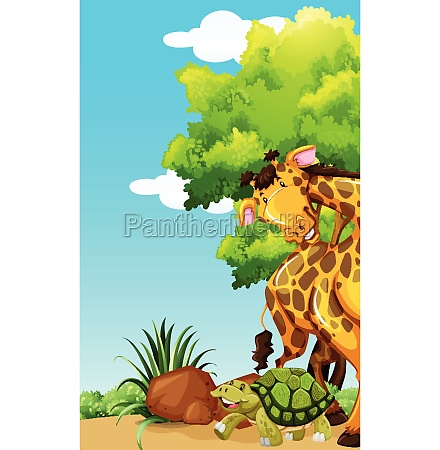 giraffe and turtle in the park