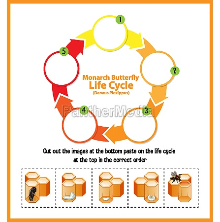diagram showing life cycle of honey