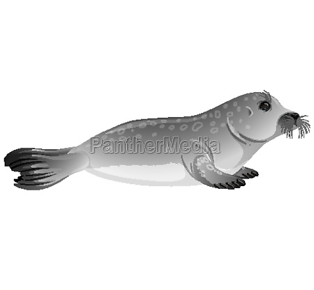 little gray seal on white background