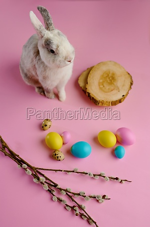 colorful easter eggs and rabbit on