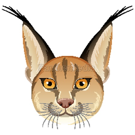 caracal cat head on white background