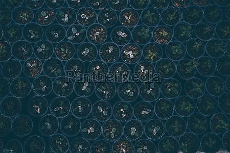 seedling, in, greenhouse - 30247802