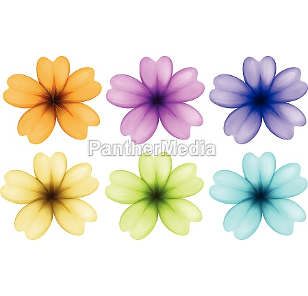 six colourful and blooming flowers