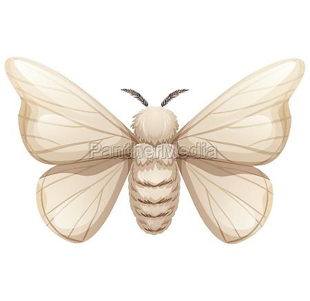 silkworm on white background