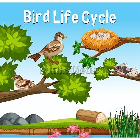 scene with bird life cycle