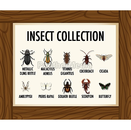 set of insect collection banner on