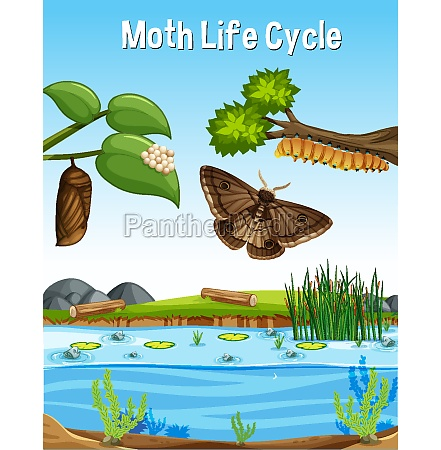 scene with moth life cycle