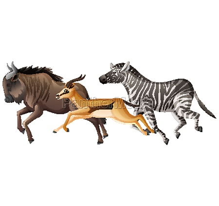 group of wild animals running on