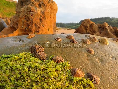 beautiful shells clinging to the rocks