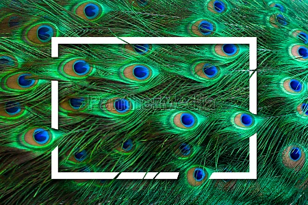 peacock feathers green dot pattern blue