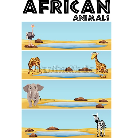 african animals by the pond