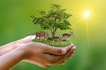 concept nature reserve conserve wildlife reserve