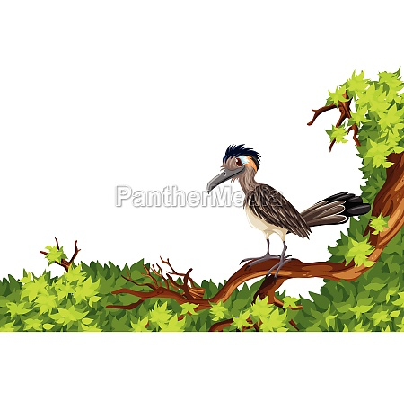 wild bird standing on branch