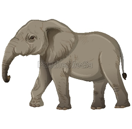 adult elephant without ivory in cartoon