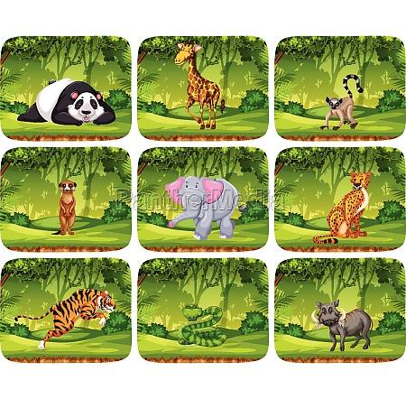 set of animals in jungle scenens