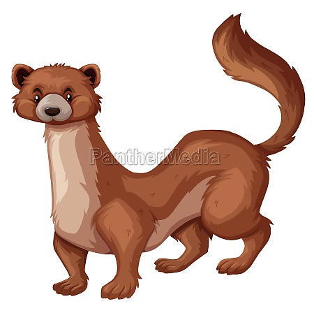 wild mongoose with brown fur
