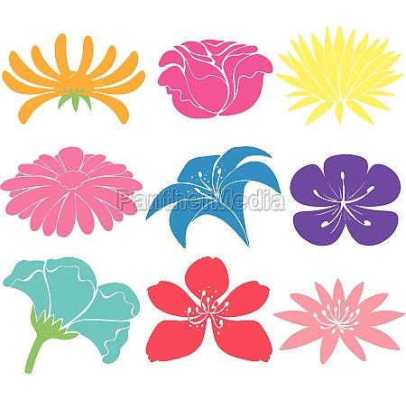 colourful floral designs