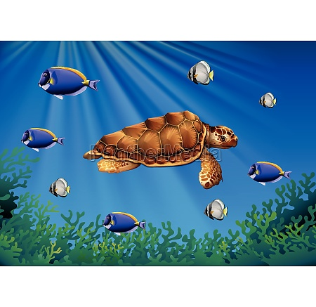 sea turtle and fish swimming underwater