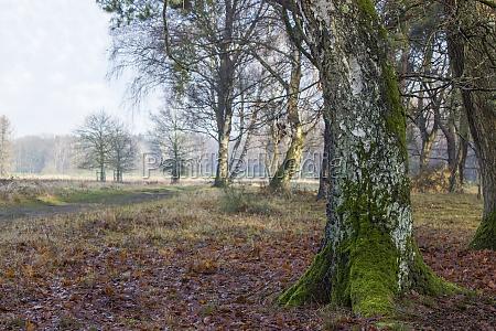 winter forest brachter wald in