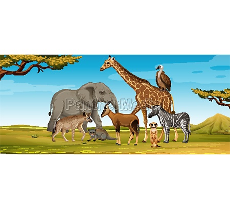 group of wild african animal in