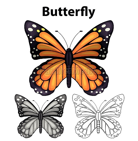 butterfly in three different drawing styles