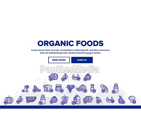 organic foods vector thin line icons