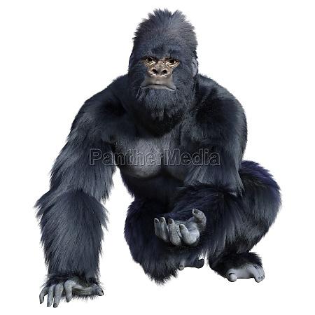 3d rendering black gorilla ape on