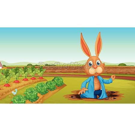 a rabbit at a farm