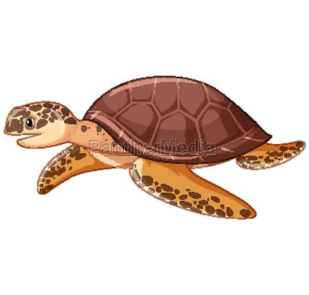sea turtle on white background