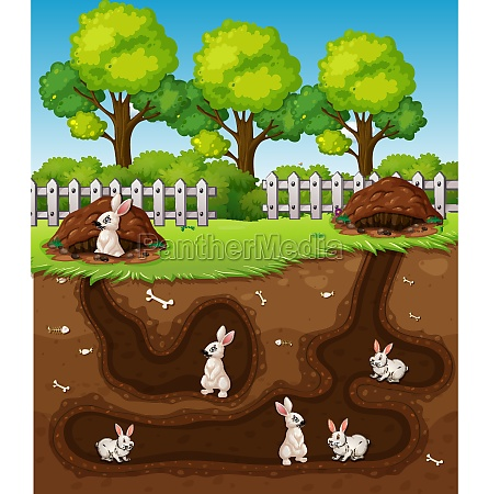 rabbit digging the hole