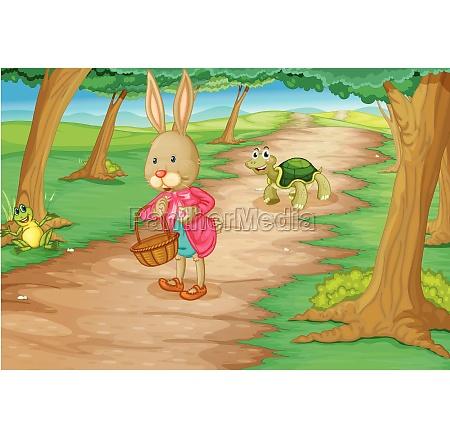 rabbit in woods