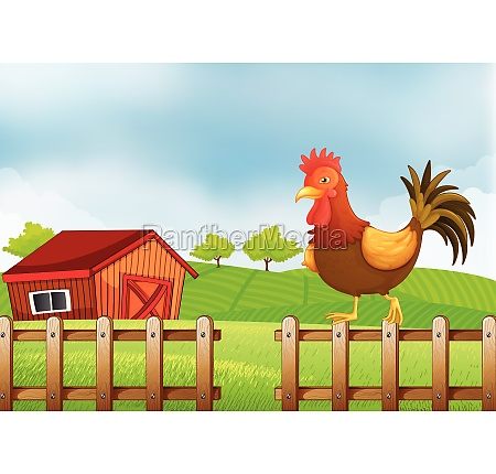 a rooster above the fence