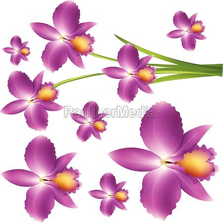 seamless purple orchid flowers