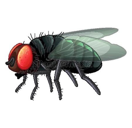 housefly on white background